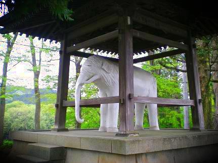 白い象.JPG