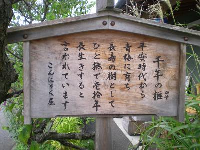 千年のカヤ.JPG