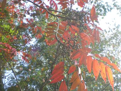 紅葉と実.JPG