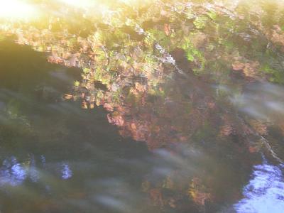 池の面.JPG