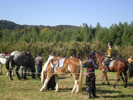 馬たち.JPG