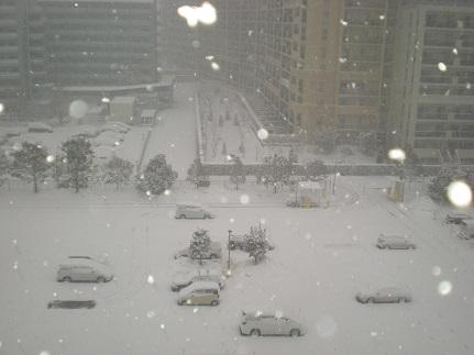 ぼたん雪.jpg