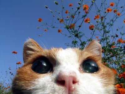 21歳全盲の猫「チョキ」
