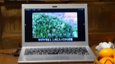 DSC08675.JPG