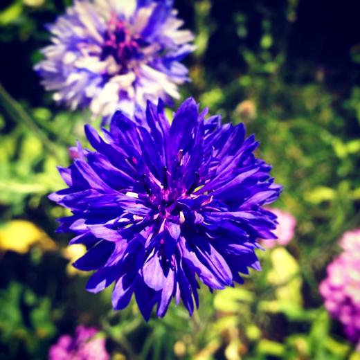 ガーデニング, gardening