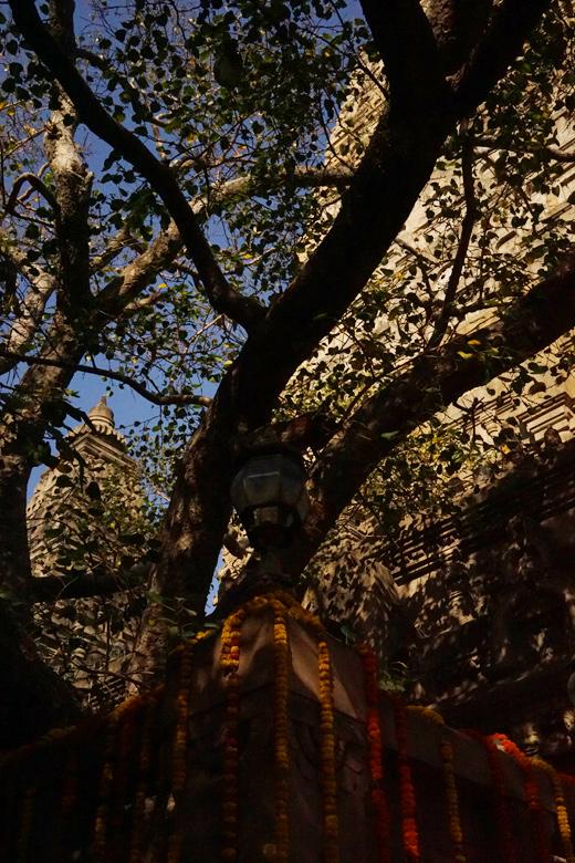 Mahabodhi Temple Complex, Bodh Gaya, India, �����, ι��, �ޥϡ��ܡ��ǥ�����, �֥å�����