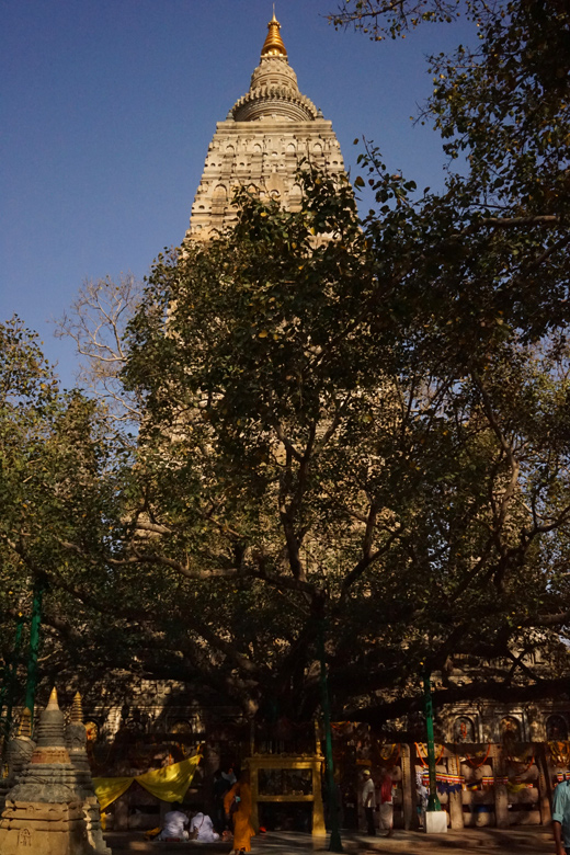 Mahabodhi Temple Complex, Bodh Gaya, India, インド, 旅行, マハーボーディー寺院, ブッダガヤ