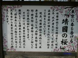 3月21日靖国の桜1