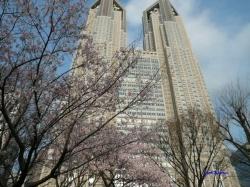 3月21日靖国の桜その2_4