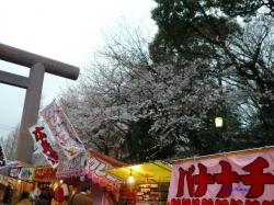 靖国神社夕暮れ時の桜2