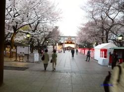 靖国神社夕暮れ時の桜4