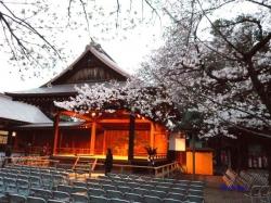 靖国神社夕暮れ時の桜7