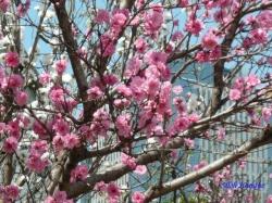 神田川昼下がりの花1