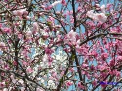 神田川昼下がりの花2