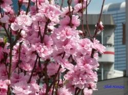 神田川昼下がりの花3