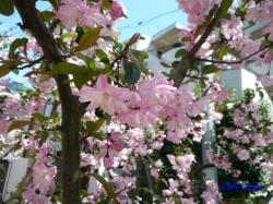 神田川沿いの公園の花1