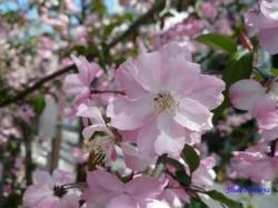 神田川沿いの公園の花2
