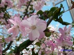 神田川沿いの公園の花3
