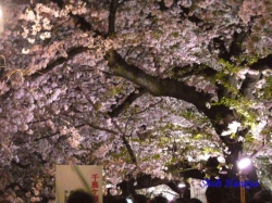 01_千鳥ヶ淵緑道桜並木の入り口