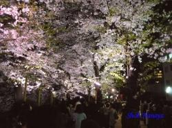04_千鳥ヶ淵緑道の桜の通行中の人影