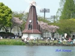 浮間公園の桜2