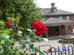 ベルモント公園のバラ3