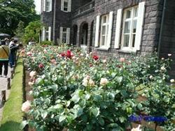 旧古河庭園のバラ2