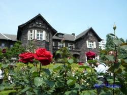 旧古河庭園のバラ5