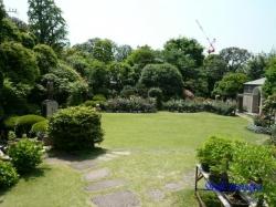 鳩山会館のバラ1
