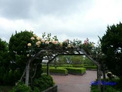 芝浦中央公園のバラ1