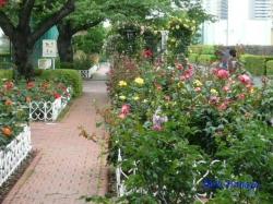 芝浦中央公園のバラ2