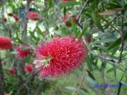 木場公園の花1