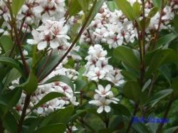 木場公園の花2
