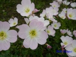 木場公園の花3