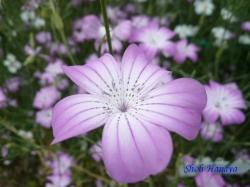 木場公園の花4