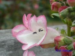 木場公園の花7