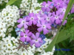 木場公園の花8