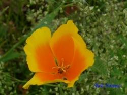 木場公園の花14