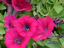 木場公園の花15
