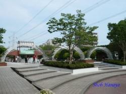 葛西総合公園のバラ1