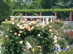 葛西総合公園のバラ2