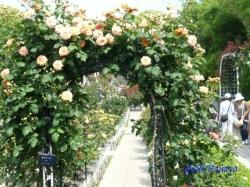 葛西総合公園のバラ4