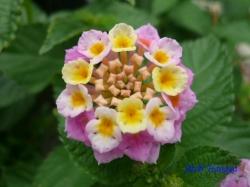 足立区道端の花1