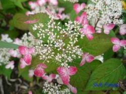 足立区道端の花4