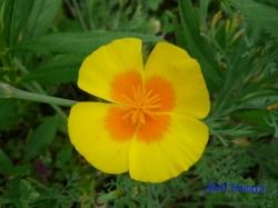 舎人公園の花1