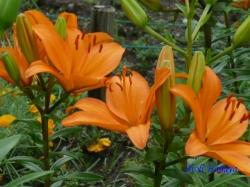 舎人公園の花2