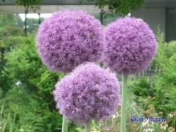舎人公園の花3