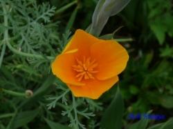 舎人公園の花4