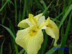 舎人公園の花7