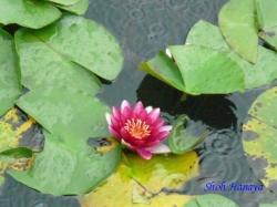 舎人公園の花8